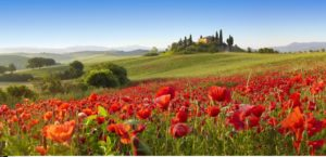 живописные холмы тосканы