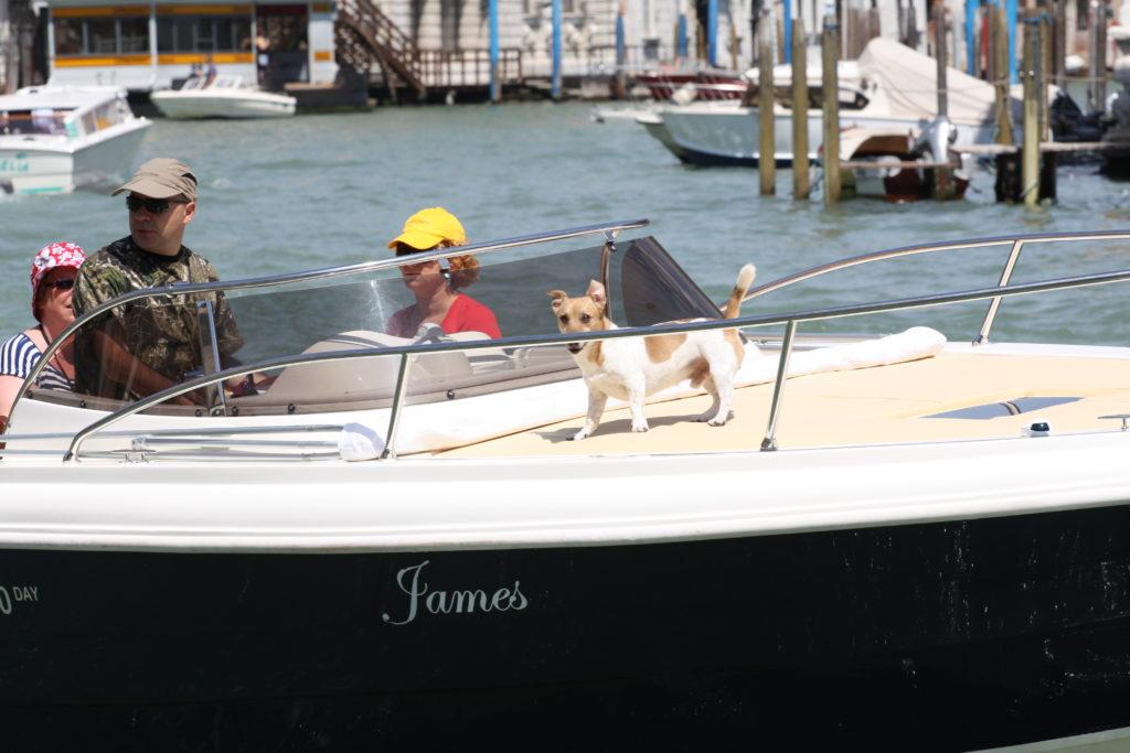 Венеция. Собачка на катере по Большому каналу